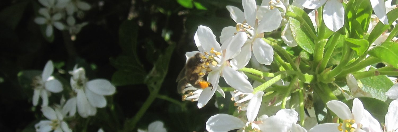 cropped-IMG_0939-abeille-pollen.jpg